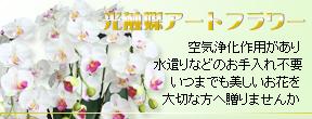 banner_top03